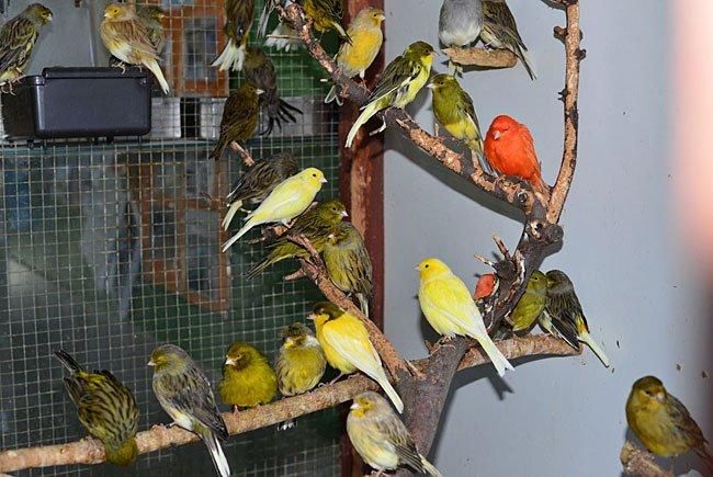 Gerettete Ziervögel warten im Wiener Tierschutzverein nun auf neue Besitzerinnen und Besitzer