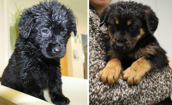 Fünf Hundewelpen wurden vor einem ungewissem Schicksal gerettet