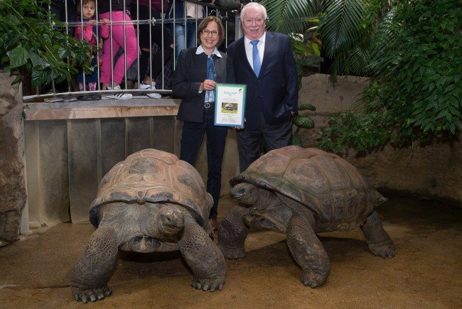 """Häupl nun Pate von Schönbrunner Riesenschildkröte """"Schurli"""""""