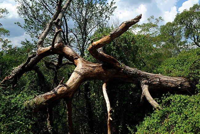 Tag des Baumes: Wien sichert Grüne Lungen für die nächsten Generationen
