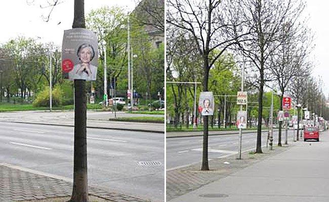 """In Margareten wurden die """"Griss-Bäume"""" entdeckt."""