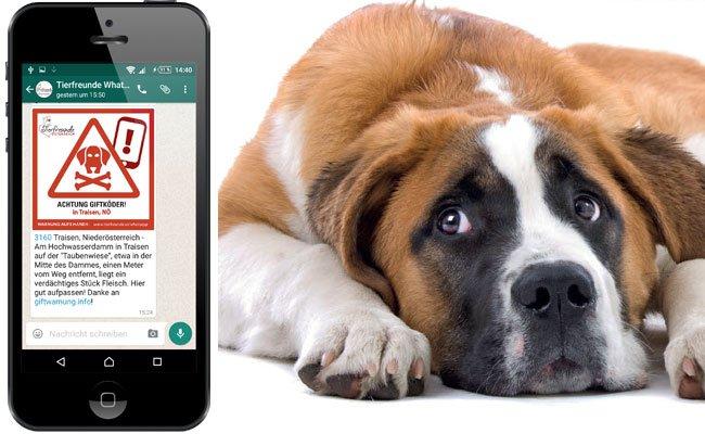 Eine neue WhatsApp-Gruppe warnt Tierhalter vor Giftködern