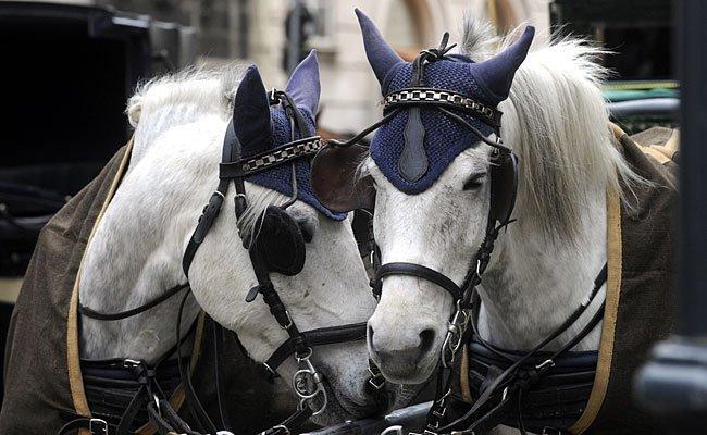 Die Fiaker-Pferde in Wien bekommen künftig ab 35 Grad hitzefrei.