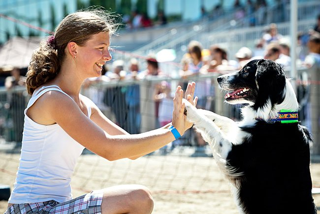 Jede Menge Spaß verspricht der Hundetag in Baden