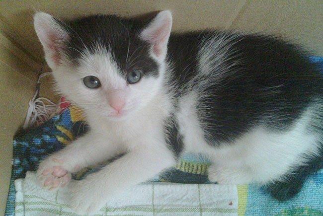 Baby-Katzen sind süß - doch ihre Anschaffung will gut überlegt sein