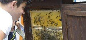 Bienentag 2016 im Wiener Rathaus: Infos rund um die fleißigen Tiere