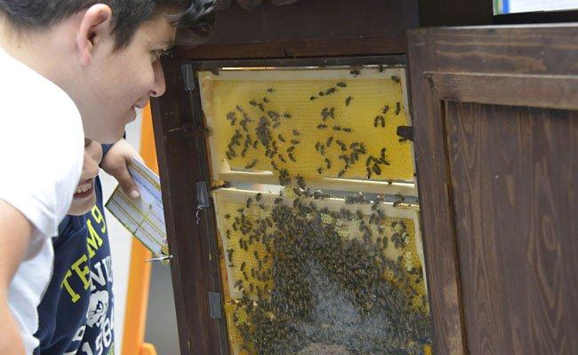Das Wiener Rathaus lädt wieder zum Bienentag.