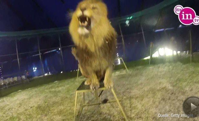"""Welcher Star früher sein Geld als """"Löwenzähmer"""" verdiente, seht ihr im Video."""