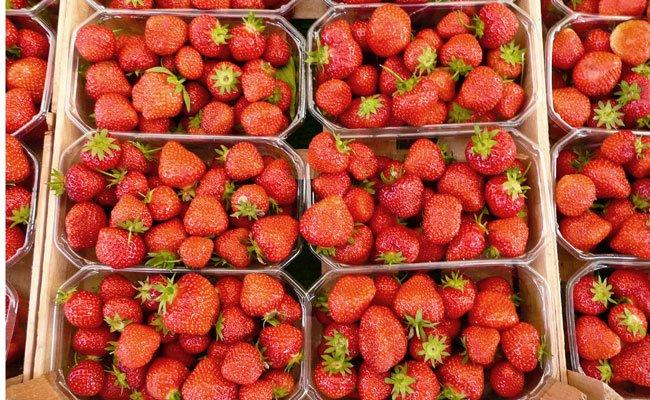 Heuer gibt es weniger Erdbeeren zu ernten als zuletzt.