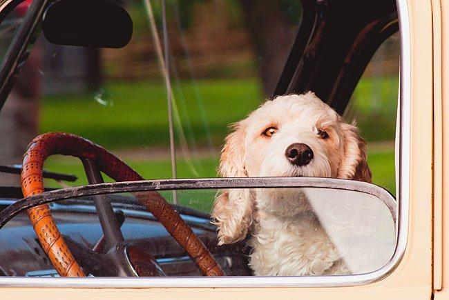 Mit dem Hund auf Urlaub fahren ist kein Problem - wenn man ein paar Dinge beachtet