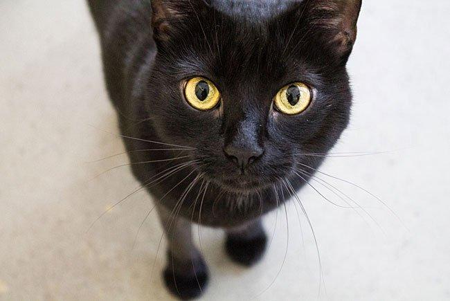 Katze Muki ist auf dem Weg der Besserung