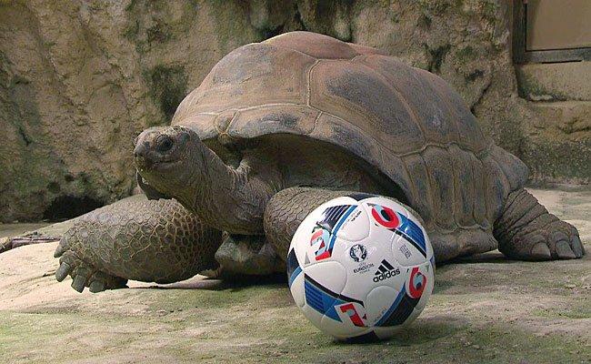 Riesenschildkröte Schurli glaubt an Österreich