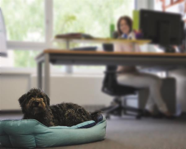 Mit dem Hund ins Büro zu kommen, kann den Arbeitsalltag bereichern