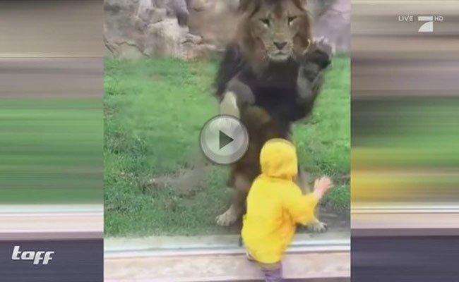 Immer öfter kommt es zu gefährlichen Szenen in Zoos.