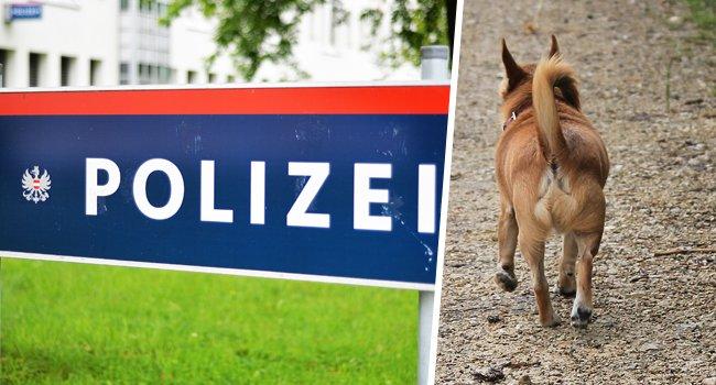 Eine aggressive Chihuahua-Besitzerin brach einer Polizistin in Floridsdorf die Nase.
