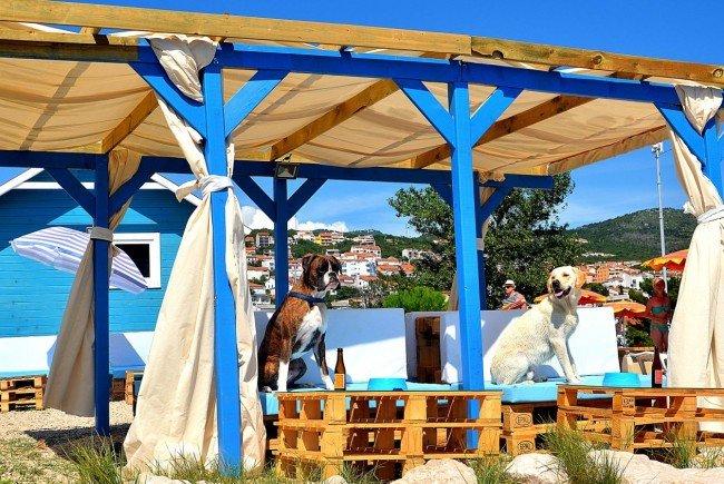 Ein Luxusstrand für Hunde in Kroatien.