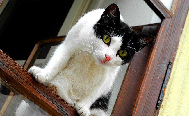 In Panik sprang Katze Lily aus einem Fenster