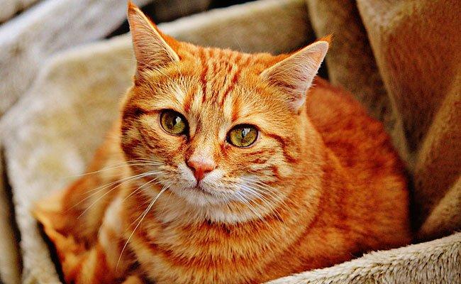 Die beiden Katzen hatten ein massives Unsauberkeitsproblem - bis Petra Ott half