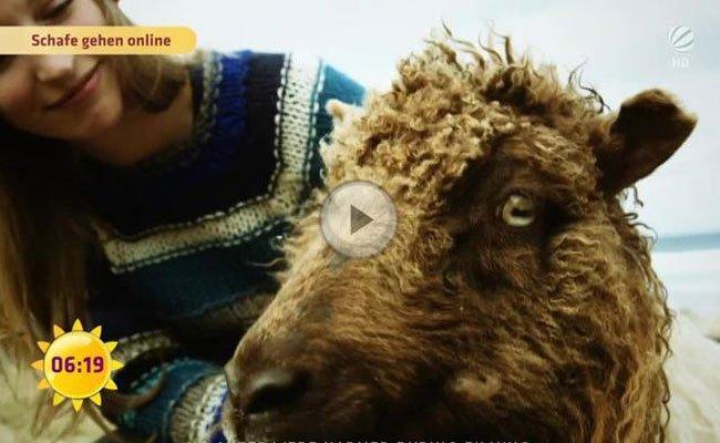 Auf den Färöer-Inseln erkunden Schafe mit einer 360°-Kamera die Landschaft.