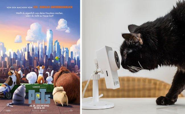 """Der Animationsfilm """"Pets"""" zeigt, was Haustiere allein daheim treiben"""