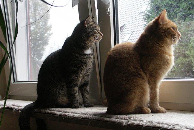 Kippfenster können für Katzen zur Todesfalle werden