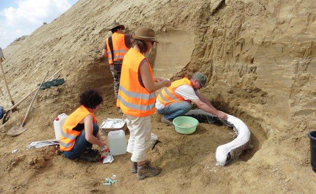 Das Paläontologen-Team des Naturhistorischen Museums Wien bei der Bergung eines der Stoßzähne