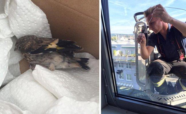 Der Vogel-Rettungseinsatz Dienstagfrüh in Ottakring.