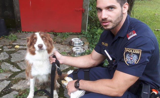 Der völlig verängstigte Hund wurde von den Polizisten liebevoll betreut.