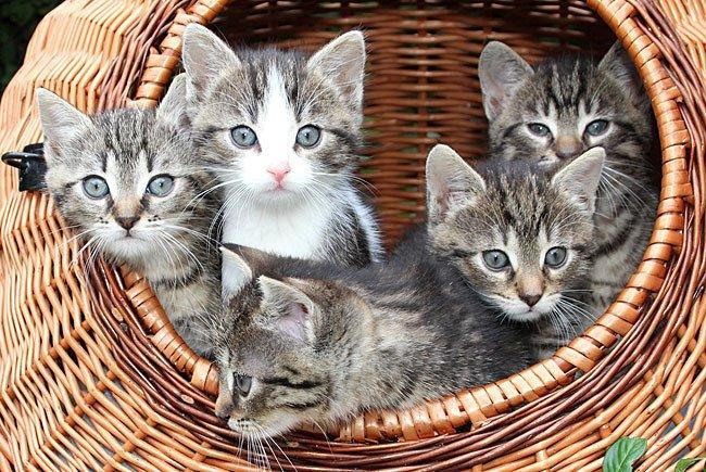 Zum Weltkatzentag gab es eine Umfrage über die Samtpfoten