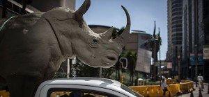 Welt-Artenschutzkonferenz in Südafrika gestartet