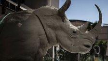 Artenschutzkonferenz in Südafrika gestartet