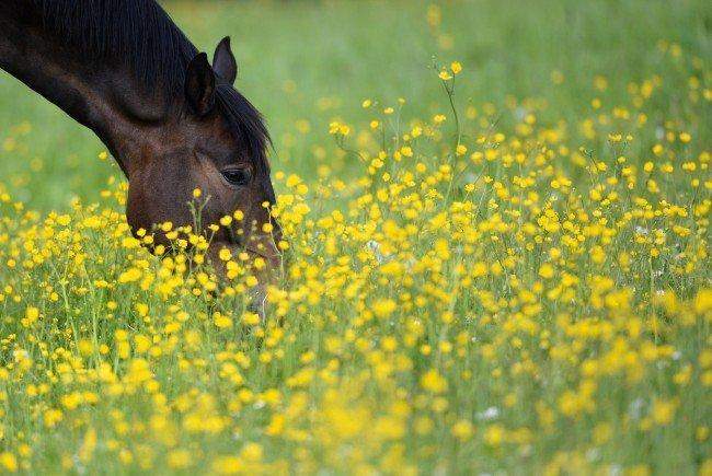Ein Pferd aus Wien wurde mit dem West-Nil-Virus infiziert.