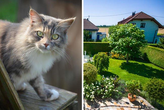Für Katze Candy war der vermeintlich tolle Garten zunächst alles Andere als schön