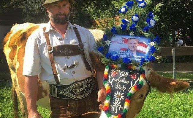 Diese Tiroler Kuh warb für den freiheitlichen BP-Kandidaten