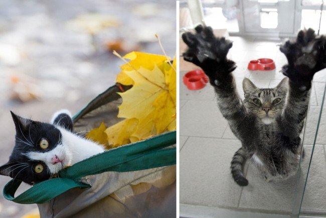 Katzen sind immer für eine Showeinlage gut.