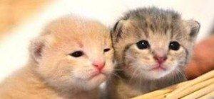 Diese kleinen Katzen sind einfach zu süß