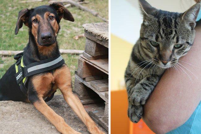 Beim Tag der offenen Tür gibt es viele Infos rund um die Schützlinge im Tierschutzhaus