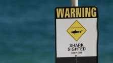 Australien: Dritte Hai- Attacke in einem Monat