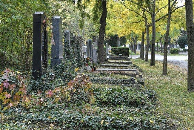 Der Waldfriedhof 2 wurde am Zentralfriedhof eröffnet.