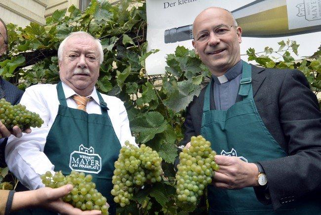 Der Wiener Bürgermeister bei der traditionellen Weinlese