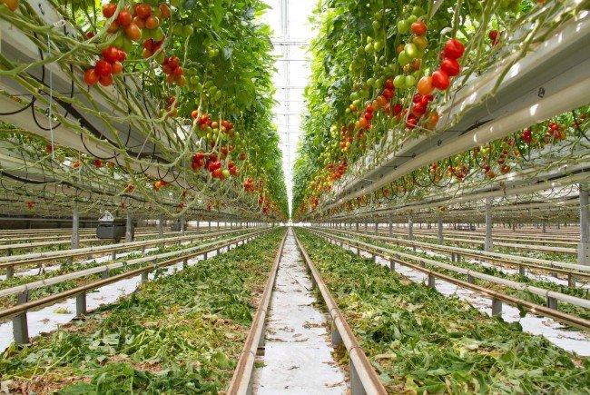 Austria´s Startups: Österreichische Lebensmittelproduktion im Fokus
