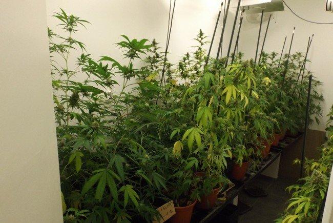 Eine Drogenplantage in Hernals konnte von der Polizei entdeckt werden