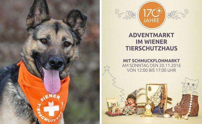 Der Adventmarkt im Wiener Tierschutzverein findet statt