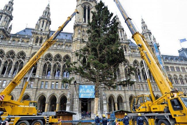 Der Weihnachtsbaum aus dem niederösterreichisch-steirischen Grenzgebiet wurde aufgestellt