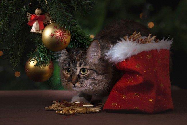 Keine gute Idee: Haustiere als Weihnachtsüberraschung