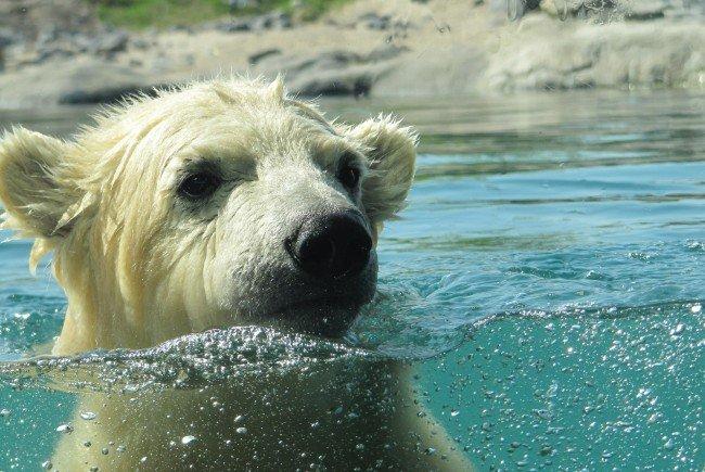 Der Traum aller Tierliebhaber: Das Zoohotel.