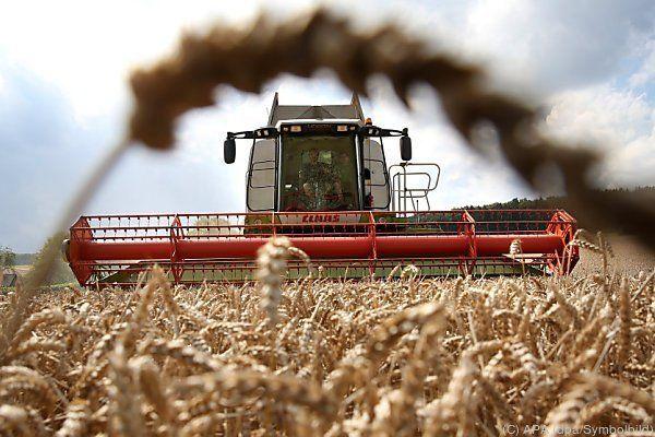 Den Agrarkuchen teilen sich wenige Konzerne auf