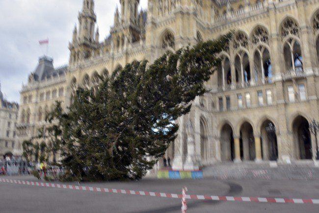 Am Donnerstag wurde der Christbaum am Wiener Rathausplatz gefällt.