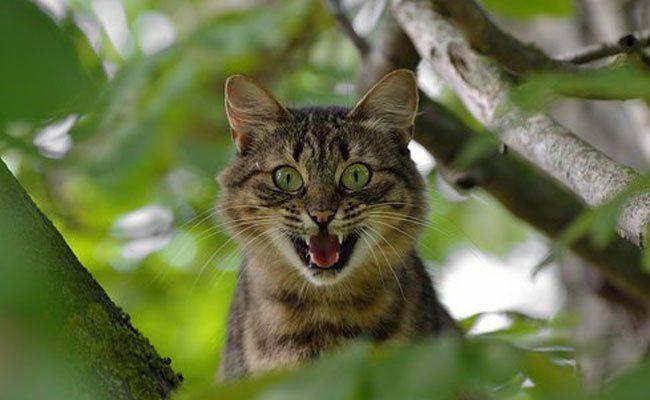 Wiens Katzenflüsterin sei dank: Wilhelm und Mors können wieder aufatmen