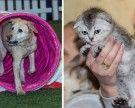 Das war die Wiener Haustiermesse 2017 in der Marx Halle